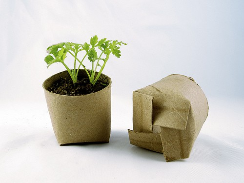 Seedling_Toilet_Paper_rolls
