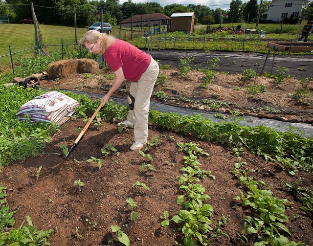 Organic Gardening, it's Benefits and Formation - Conserve Energy Future