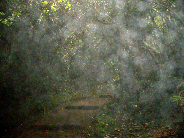 Causes, Effects and Solutions of Acid Rain - Conserve Energy Future