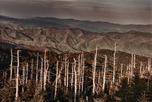 Deforestation_ForestDamage