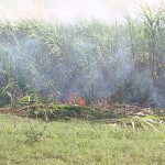 Causes and Effects of Agricultural Pollution