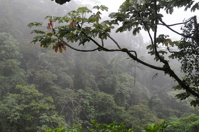 35 Facts of Tropical RainForest - Conserve Energy Future