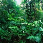 35 Facts of Tropical RainForest