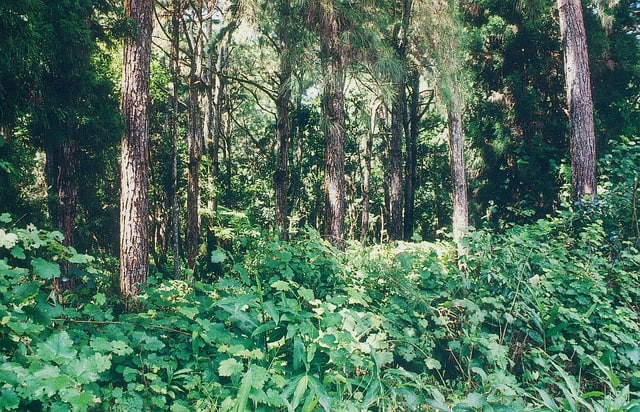 Tropical_Rainforest_Plants