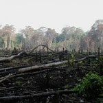 Causes and Effects of Environmental Degradation