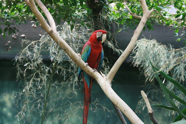 Tropical-rainforests-biome