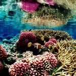 Top 25 Coral Reef Facts