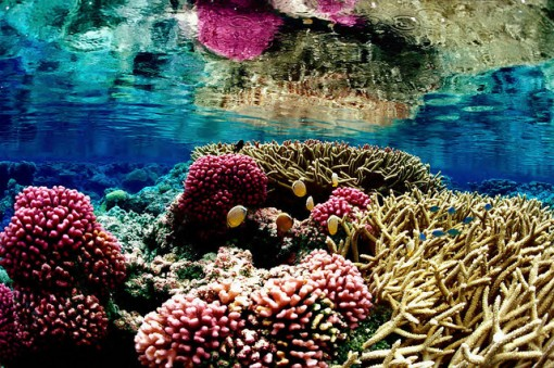 Top 25 Coral Reef Facts - Conserve Energy Future