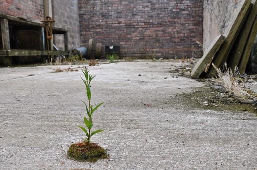 ecological-succession
