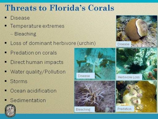 threat-florida-corals