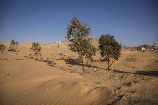 causes of desertification What causes desertification the immediate cause is the removal of vegetation unprotected, dry soil surfaces then blow away with the wind or are washed away by flash floods, leaving.