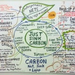 What are Carbon Sinks?