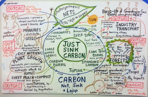 carbon-net-sink-and-loop