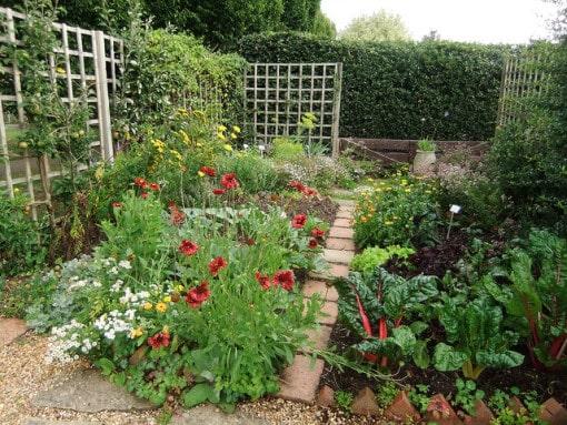 small-organic-garden