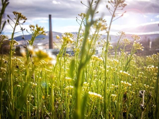 ecology-environment-energy