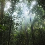 30+ Surprising and Innovative Ways For You To Save Rainforests
