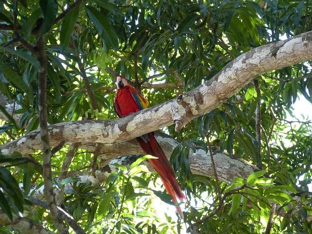 parrot-bird-costa-rica-rainforest