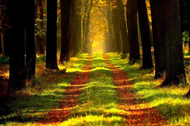 conserve-forests-vista-tour-save-tree