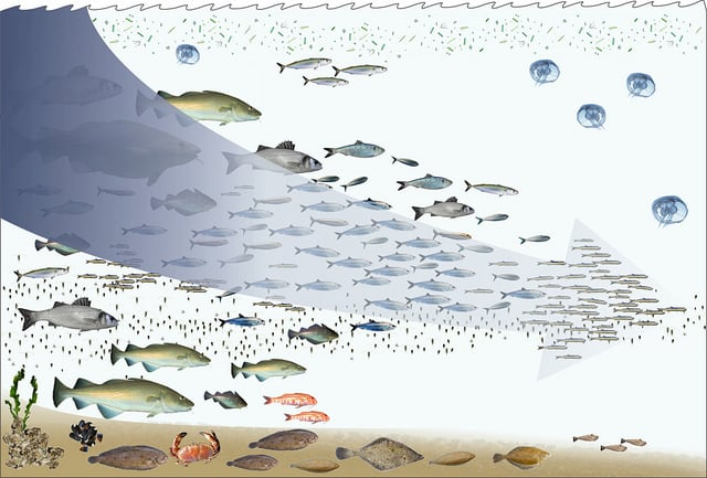 fishing-down-the-foodweb-overfishing