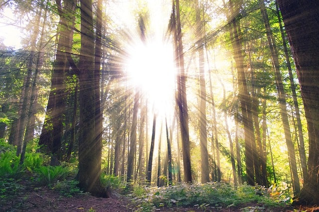 forest-sunlight-trees-woods-earth-friendly