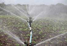 irrigation-agriculture-sprinkling