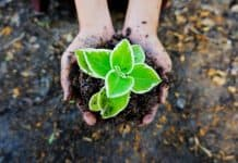 seedling-soil-green-plant-ecology