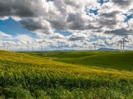 wind-farm-wind-turbine-electricity
