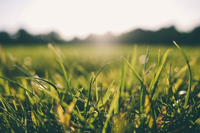 grass-morning-dew-nature-green