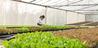conservatory-agriculture-aquaculture-organic-agriculture
