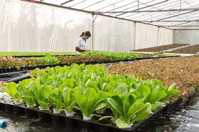 conservatory-agriculture-aquaculture-organic-agriculture