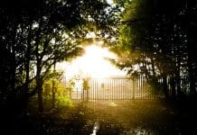 trees-sunshine-nature-landscape