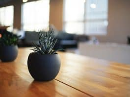 plant-houseplant-indoor-pot-potted