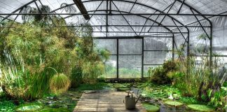 lotus-greenhouse-waterlily-garden