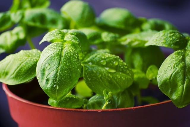 basil-herbs-food-fresh-cooking