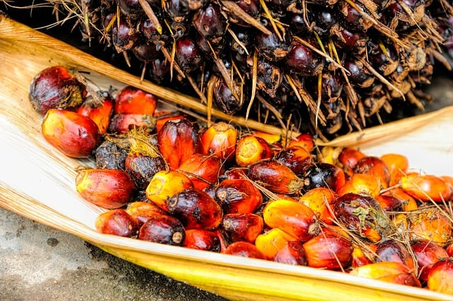 palm-oil-fruit-background-ripe