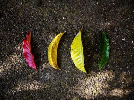 save-leaves-green-ecology