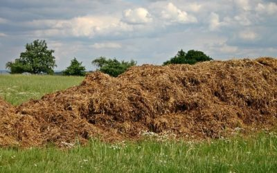 Various Advantages & Disadvantages of Biomass Energy