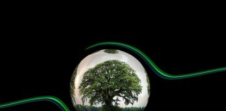 ecology-protection-protect-tree