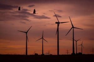 wind-park-sunset-birds-wind-energy