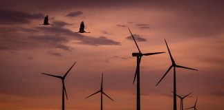 wind-park-sunset-birds-wind-energy