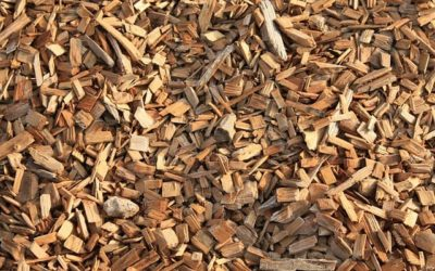 What is Biomass Energy and How Does Biomass Energy Work?