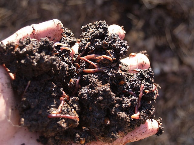is usually used to decompose food materials using a bevy of insects etc uses red worms fungi bacteria and