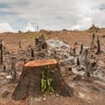 amazon-fires-brazil