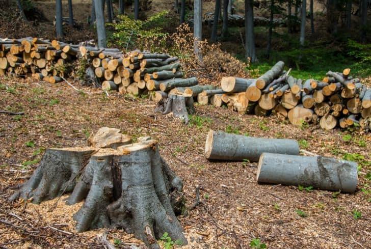 deforestation-trees-forests-logging
