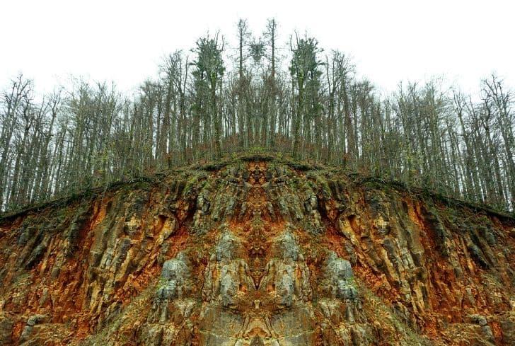 acid-rain-effect