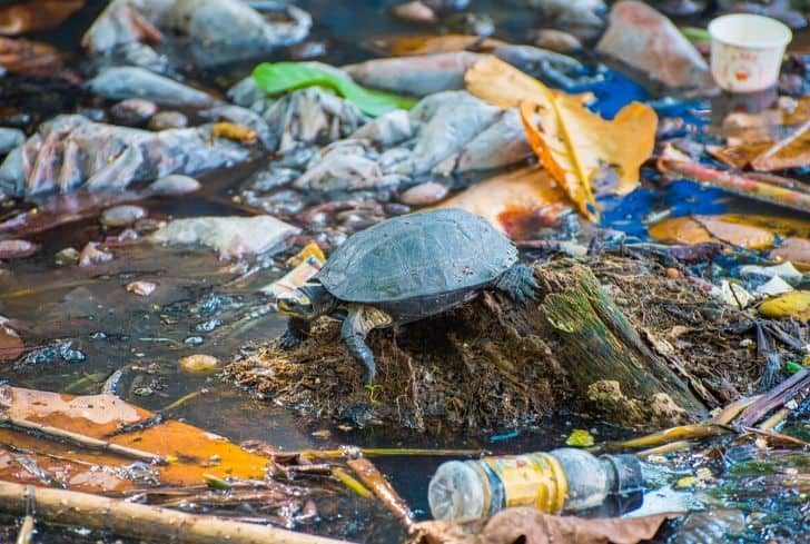 turtle-in-water-pollution-plastic-bottles