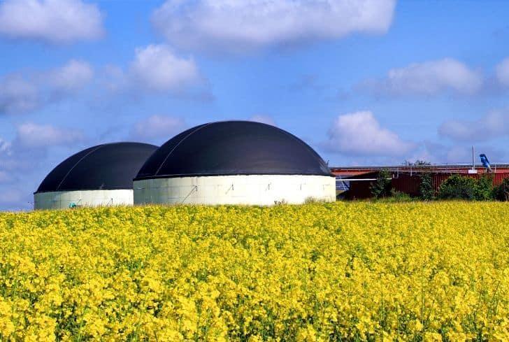 biofuel-sunflower