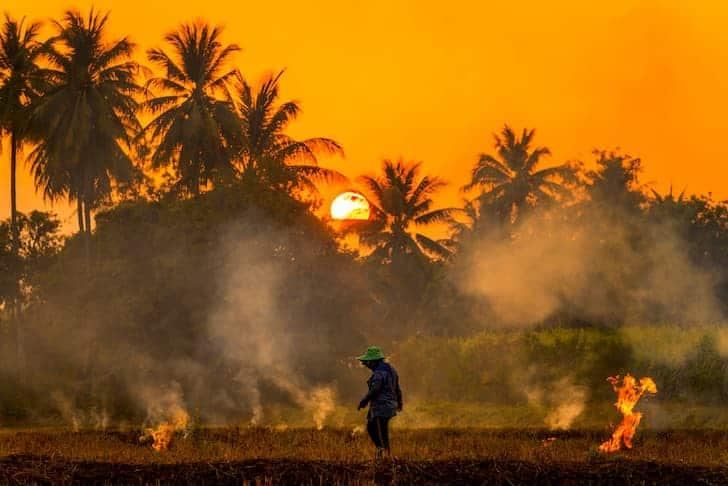 photo-farmers-burn-rice-fields-rice