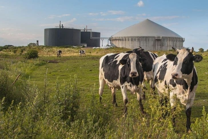 biogas-plant-with-cows