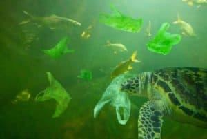 photo-water-environmental-pollution-plastic-problem